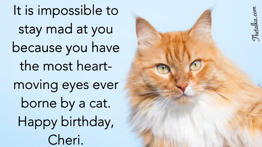 Happy Birthday Wishes For Cat