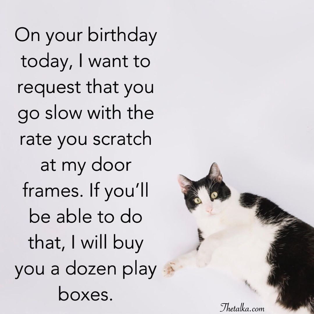 Funny Happy Birthday Wishes For Cat
