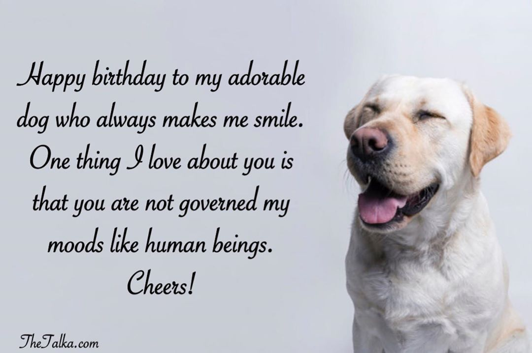 Cute Happy Birthday Wishes For Dog Thetalka